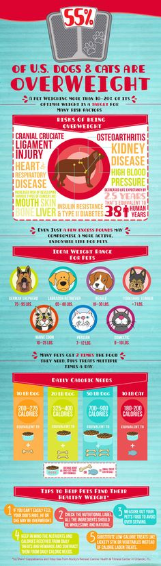 Pet Obesity Infographic, overweight pets | 26 Bars & a Band |