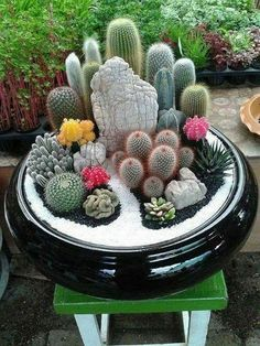 27+ Beauty Cactus and Succulent Garden Ideas for Indoor #gardendesign #gardeningtips #gardening
