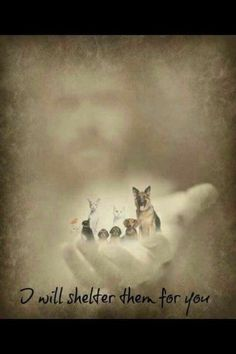 God loves our fur babies! He wouldn't let them just cease to exist; Animals do have a soul, and we'll see them again in heaven. All Dogs, I Love Dogs, Dogs And Puppies, Doggies, Animals And Pets, Cute Animals, Pet Loss Grief, Labrador, Pet Remembrance