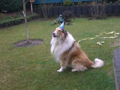 My dog Sammy on its 6th birthday =)