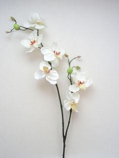 Google Image Result for http://www.withycombefair.co.uk/images/ff_dainty_orchid_white.jpg
