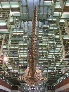 Bibliothek namens Jose Vasconcelos, Mexiko-Stadt