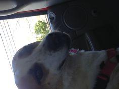 My second oldest pet...Zoe