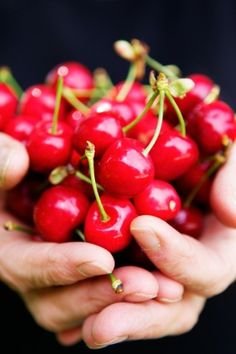 cherries by shannon