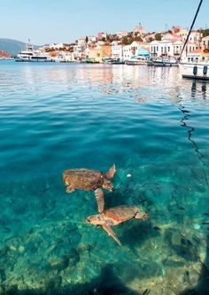 #greece #greecetrip #greeceislands #greecetravel #greecelover #greecelife #greeceisland #greecebeach #greecelove #greeceholiday #greecevacation #greecephotography #greeceis #greecefood #santorini #greecebeauty #zakynthos #lesbos #crete #rhodes #kefalonia #capitalfeather #corfu #samos #naxos #lefkada #andros #kos #paros #tinos #milos #euboea #chios #lemnos #thassos #karpathos #icaria Southwest Air, Beautiful World, Beautiful Places, Greece Islands, Travel Illustration, Mundo Animal, Landscape Pictures, Travel Goals, Dream Vacations