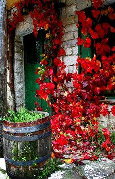 Monastery of Kipina - Kalarytes, Ioannina, Greece (by Dimtze) Beautiful Gardens, Beautiful Flowers, Beautiful Places, Places Around The World, Around The Worlds, Greek Isles, Mykonos, Santorini Greece, Greece Travel