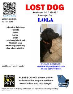 Lost Dog - Labrador Retriever - Shellman, GA, United States