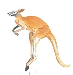 Kangaroo Watercolor Original Painting by WaterInMyPaint on Etsy