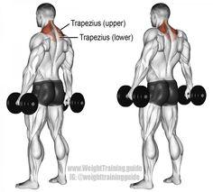 Dumbbell shrug exercise illustration