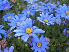Blue 4