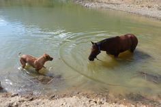 A hot autumn day and busy trails - what better way to relax at Horse About Trails