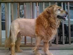when I get a dog, I'm cutting his hair like this!