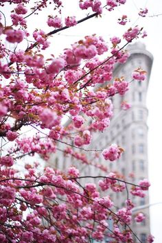 Get outside, New York City's in full bloom with perfectly pink flowers this spring!