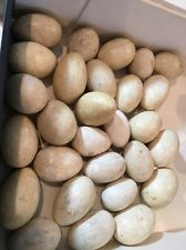 6 PACK WHITE CERAMIC DUMMY CHICKEN NESTING EGG HATCHING Craft Vintage 9A $12 ebay paint for easter