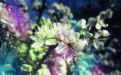Earth Flower  Bird Pastel Wallpaper