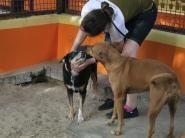 Pet Enclosures, Dog Kennels, Cattery, Best Dogs, Your Pet, Dubai, Pets, Animals, Animaux