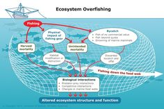 Overfishing can disturb the ecological balance of marine ecosystems. 'Fishing down the food web' means fishing for smaller and smaller fish because the larger ones are fished out.