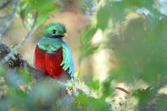 There are 1,154 species of birds native to Canada, the United States, and Mexico—and 432 of them are in danger of extinction, according to the first-ever assessment of the state of North American birds released just in time for Endangered Species Day. According to State of North America's Birds …