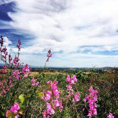 Campos de #montilla desde el borde del camino #primavera #Spring #flores #bluesky
