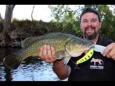 As I sit here waiting for the Murray cod season to open back up I am busting at the seems to cast a surface lure again. Murray cod are the most exciting fish...