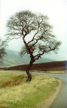 Buy 'Standing Alone. Taken in Glencoe in the Scottish Highlands. Standing Alone, Win Prizes, One Tree, Scottish Highlands, Country Roads, Trees, Nature, Artists, Photos