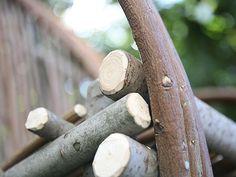 Australian Blackwood (Acacia melanoxylon) - The Chairman manufacturers of Bentwood eco furniture