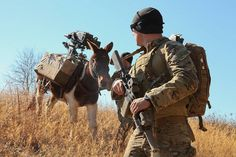 Donkey WithSoldier. A #USArmy Green Beret, assigned to 3rd Special Forces Group (Airborne), provides security for a mule carrying the Mk 47 grenade launcher during MULE Packing Training on Fort Bragg, N.C., Jan. 27, 2015. (U.S. Army photo by Sgt Edward F French IV/Released). Courtesy: wwwarmy.mil The United States Army, (USA).