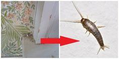 Pavúky a všetku háveď to vyženie z vášho domu: Najlepšia rada, ako udržať byt bez hmyzu na celé mesiace! Jin, Insects, Pets, Animals, Board, Animales, Animaux, Animal, Animais