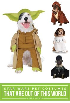 Your pooch will look