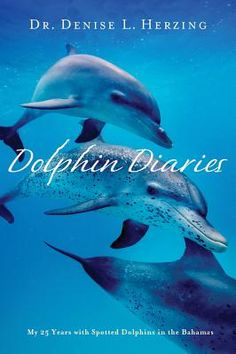 Denise Herzing has done some of the most amazing long term research on wild dolphins. Some day I hope to join one of her summer trips.