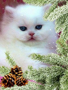Котенок - анимация на телефон №1361001