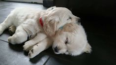 Oh boi!! They are really cute and adorable!http://perthhomecleaners.com.au/carpet-cleaning0420 270 260