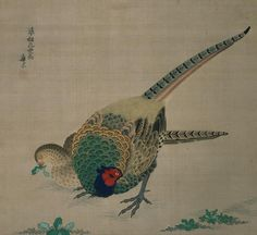 "centuriespast: "" Hanging Scroll (pheasant) Maruyama Okyo – Watercolor, silk, paper Philbrook Museum c. Japanese Artwork, Japanese Painting, Ghost Images, Google Art Project, Art Asiatique, Japan Art, Japanese Artists, Pheasant, Botanical Art"