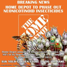 Coalition presses for all retailers to make commitment to protect bees WASHINGTON - Home Depot (NYSE: HD), the world's largest home-improvement chain, has announced that it has removed neonicotinoid pesticides, a leading driver of global bee declines, from 80 percent of its flowering plants and that it will complete its phase-out in plants by 2018. This announcement follows an ongoing campaign and letter by Friends of the Earth and allies urging Home Depot to stop selling plants treated…