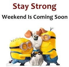 humor Hilarious For all Minions fans this is your lucky day, we have collected some latest fresh insanely hilarious Collection of Minions memes and Funny picturess Minion Humour, Minion Jokes, Minions Quotes, Funny Minion, Minion Sayings, Funny Sayings, Image Minions, Minions Love, Minion Stuff