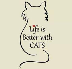 A macska egy különleges állat, egy igazán mágikus négylábú. Az egyiptomiak is nagy becsben és tiszteletben tartották a bársonytalpúakat. Úgy tartják, hogy a negatív energiáktól megvédi az otthonát.