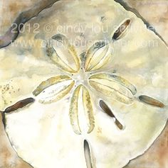 """Dollar in the Sand""  Watercolor  www.cindylouscrivner.com"