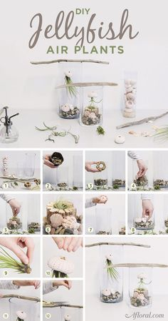 Air Plant Jellyfish DIY Air Plant JellyfishDIY (disambiguation) DIY stands for Do It Yourself. DIY may also refer to: Air Plant Terrarium, Garden Terrarium, Succulents Garden, Planting Flowers, Succulent Terrarium Diy, Air Plant Display, Plant Decor, Indoor Garden, Indoor Plants