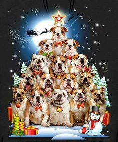 Christmas Puppy, Christmas Fun, English Bulldog Funny, English Bulldogs, Cute Dog Pictures, Funny Bulldog Pictures, Baby Animals, Cute Animals, Cute Bulldogs