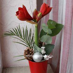 Amaryllis rouge dans un pot assorti. Une décoration festive pour Noël.