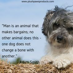 """""""Man is an animal that makes no bargains; no other animal does this - one dog does not change the bone with another""""   #plushpawsproducts #dogquotes #quoteoftheday"""
