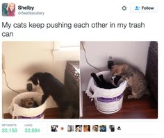 My Cats Keep Pushing Each Other In My Trash Can. ~ Memes curates only the best funny online content. Funny Animal Memes, Cute Funny Animals, Funny Animal Pictures, Cat Memes, Funny Cute, Funny Memes, Hilarious, Word Pictures, Animals Amazing