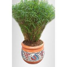 Plant nurseries in bangalore,Gift a plant online in bangalore,Buy plants online in bangalore,Send plants online in bangalore,Buy bonsai plants online in bangalore Flowering Plants In India, Bonsai Plants For Sale, Bonsai Plants Online, Order Plants Online, Toys Online, Online Gifts, Feng Shui Plants, Online Nursery, Online Shopping