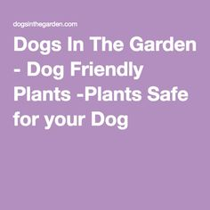 1000 ideas about dog friendly garden on pinterest dog for Dog safe houseplants