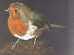 A Garden Friend A4 watercolour on black card, from a photo by Elly Rawling