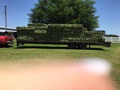 Hay For sale in defuniak-springs, fl: Alfalfa Square Bales