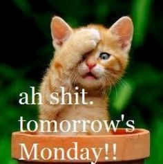 Cats: Even Cats get the Monday Blues . . .