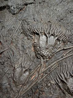 Crinoid Fossil, Dinosaur Fossils, Dinosaur Crafts, Prehistoric Creatures, Rocks And Gems, Patterns In Nature, Rocks And Minerals, Archaeology, Product Description