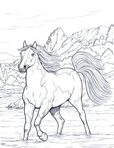 Coloring Pages of Animal Horse – Free for Kids