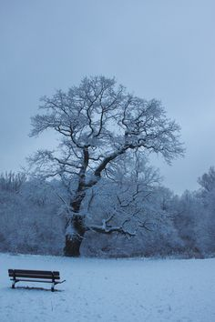 """""""Melancholy were the sounds on a winter's night.""""  ― Virginia Woolf, Jacob's Room"""